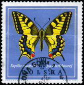 POLAND - CIRCA 1967 Swallowtail — Stock Photo