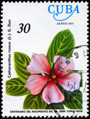CUBA - CIRCA 1977 Vinca Rosea — Stock Photo
