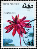 CUBA - CIRCA 1979 Red Nymphaea — Stock Photo