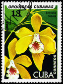 キューバ - 1980 encyclia 年頃 — ストック写真