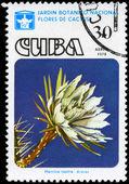 CUBA - CIRCA 1978 Harrisia — Stock Photo