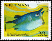VIETNAM - CIRCA 1984 Boxfish — Stock Photo