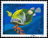 VIETNAM - CIRCA 1984 Frogfish — Stock Photo