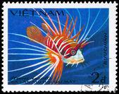 VIETNAM - CIRCA 1984 Lionfish — Stock Photo