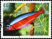 никарагуа - около 1981 неон — Стоковое фото
