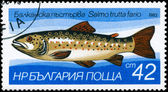 Bulharsko - cca 1983 pstruh — Stock fotografie