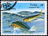 CUBA - CIRCA 1981 Mahi-mahi — Stock Photo