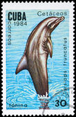 CUBA - CIRCA 1984 Bottlenose Dolphin — Stock Photo