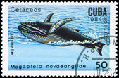 CUBA - CIRCA 1984 Humpback Whale — Stock Photo