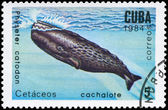 CUBA - CIRCA 1984 Sperm Whale — Stock Photo
