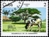 CUBA - CIRCA 1984 Artificial pastures — Stock Photo
