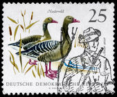 GDR - CIRCA 1968 Graylag Geese — Stock Photo
