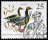GDR - CIRCA 1968 Graylag Geese — Stock Photo