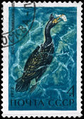 USSR - CIRCA 1972 Cormorant — Stock Photo