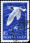 USSR - CIRCA 1972 Gull — Stock Photo