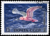 USSR - CIRCA 1972 Pink Gull — Stock Photo