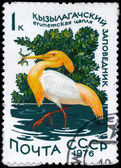USSR - CIRCA 1976 Squacco Heron — Stock Photo