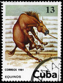 CUBA - CIRCA 1981 Horse 13c — Stock Photo
