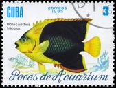 キューバ - 1985 holacanthus トリコロール年頃 — ストック写真