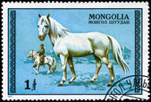 MONGOLIA - CIRCA 1977 White Stallion — Stock Photo