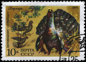 USSR - CIRCA 1975 Wood Grouse — Stock Photo