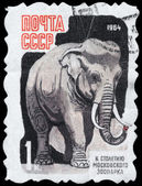 USSR - CIRCA 1964 Elephant — Stock Photo