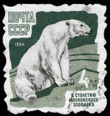USSR - CIRCA 1964 Polar Bear — Stock Photo