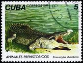 キューバ - 1982年ワニ年頃 — ストック写真