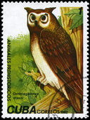 CUBA - CIRCA 1982 Owl — Stock Photo