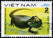VIETNAM - CIRCA 1983 Bearded Dragon — Stock Photo