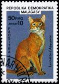 MALAGASY - CIRCA 1985 Abyssinian — 图库照片