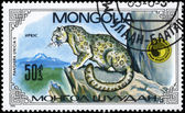 MONGOLIA - CIRCA 1985 Leopard on the Rock — Stock Photo