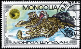 MONGOLIA - CIRCA 1985 Lying Leopards — Stock Photo