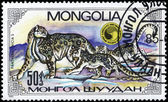 MONGOLIA - CIRCA 1985 Leopards — Stock Photo