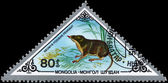 MONGOLIA - CIRCA 1983 Shrew — Stock Photo