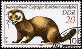 GDR - CIRCA 1982 Polecat — Stock Photo