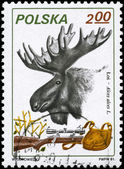 POLAND - CIRCA 1981 Moose — Stock Photo