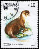 POLAND - CIRCA 1984 Otter — Stock Photo