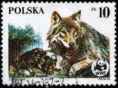 POLAND - CIRCA 1985 Wolves — Stock Photo
