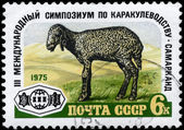 USSR - CIRCA 1975 Lamb — Stock Photo