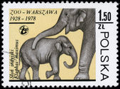 POLAND - CIRCA 1978 Elephants — Stock Photo