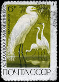 USSR - CIRCA 1968 Egret — Stock Photo