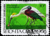 USSR - CIRCA 1968 Spoonbill and Ibis — Stock Photo