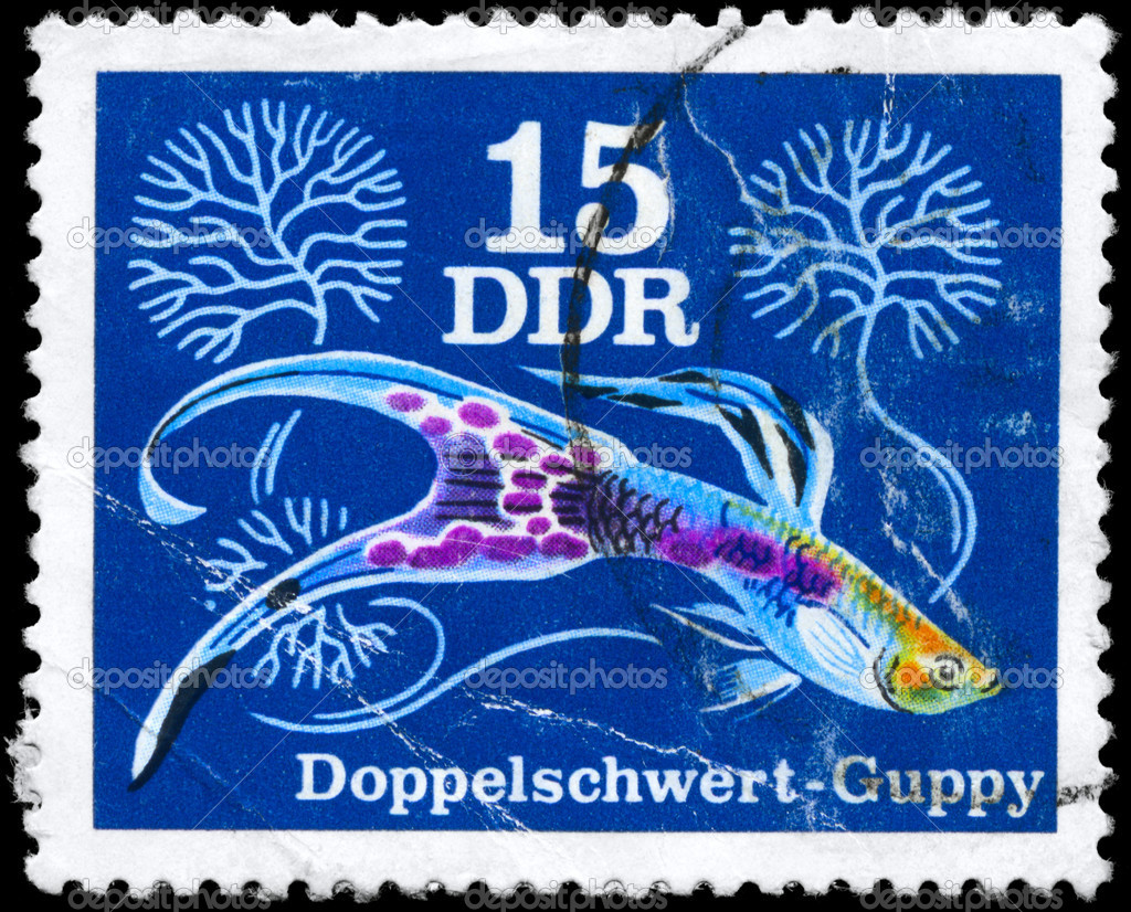 GDR - CIRCA 1976: A Stamp printed in GDR shows image of a Guppy  from the series Various guppies, circa 1976 — Stock Photo #6263785