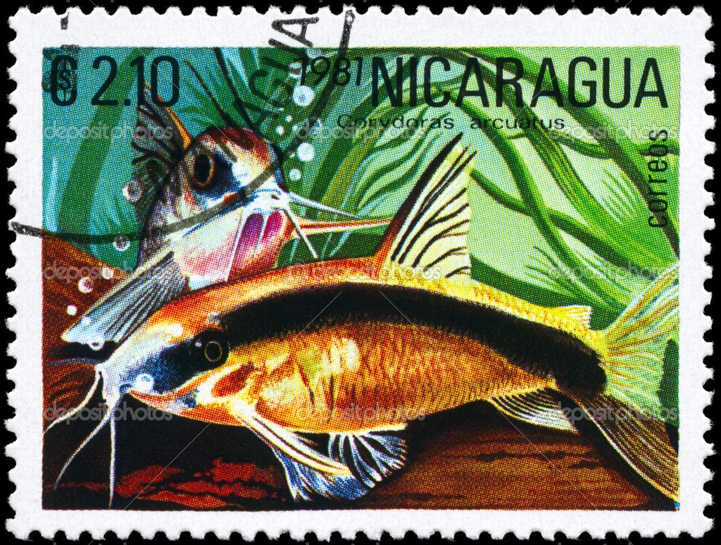 NICARAGUA - CIRCA 1981: A Stamp printed in NICARAGUA shows image of a Corydoras with the description Corydoras arcuatus from the series Tropical Fish, circa — Stock Photo #6263804