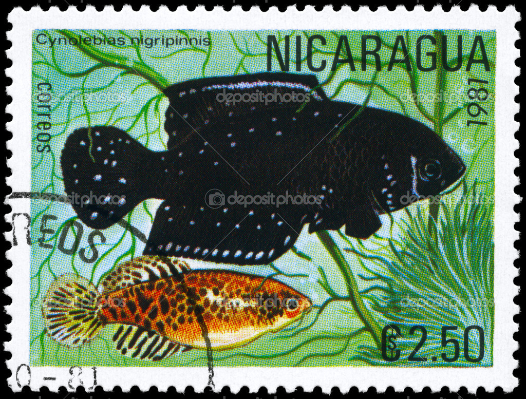 NICARAGUA - CIRCA 1981: A Stamp printed in NICARAGUA shows image of a Cynolebias with the description Cynolebias nigripinnis from the series Tropical Fish,   Stock Photo #6263840