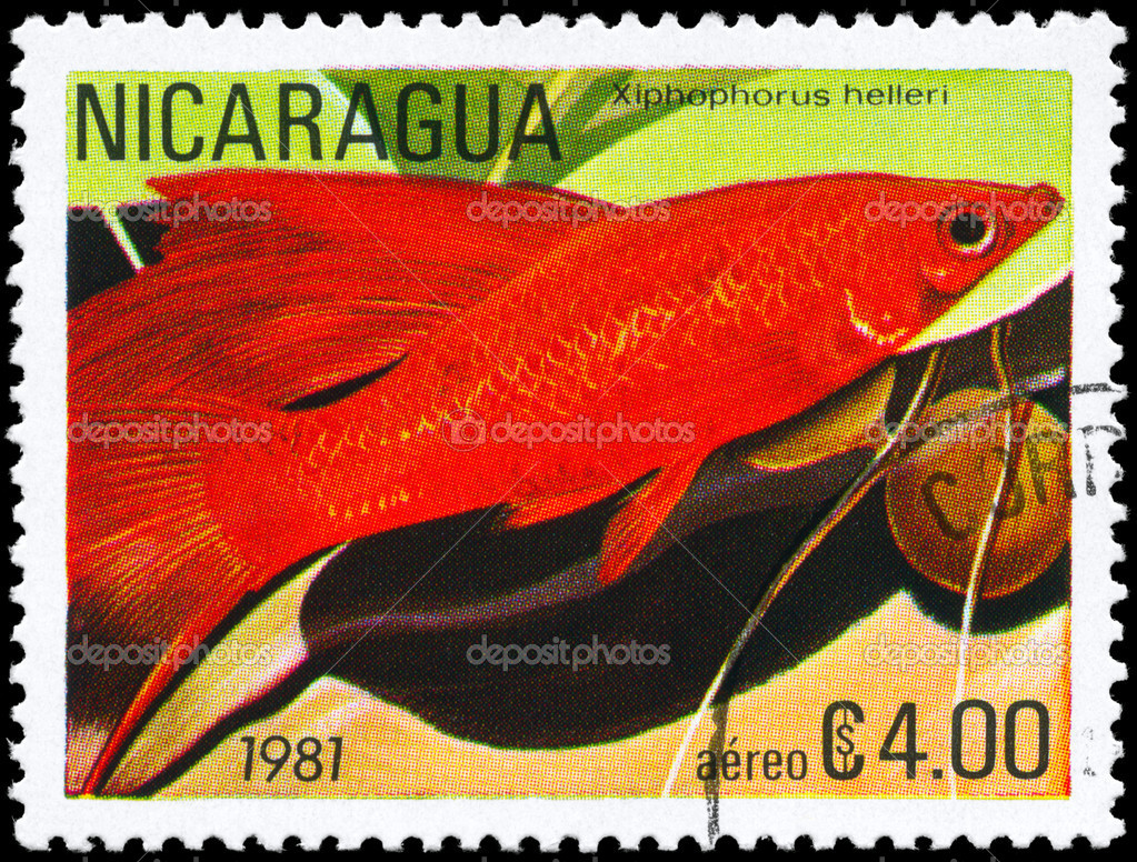 NICARAGUA - CIRCA 1981: A Stamp printed in NICARAGUA shows image of a Platyfish with the description Xiphophorus helleri from the series Tropical Fish, circ — Stock Photo #6263927