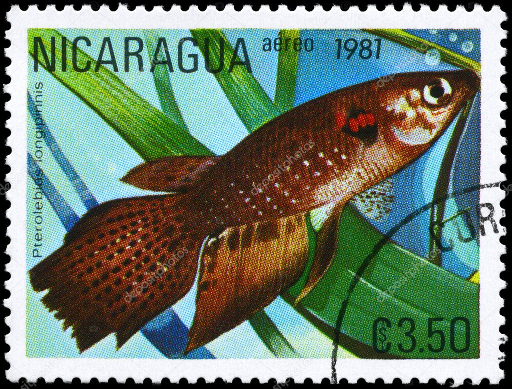 NICARAGUA - CIRCA 1981: A Stamp printed in NICARAGUA shows image of a Pterolebias with the description Pterolebias longipinnis from the series Tropical Fish — Stock Photo #6263936