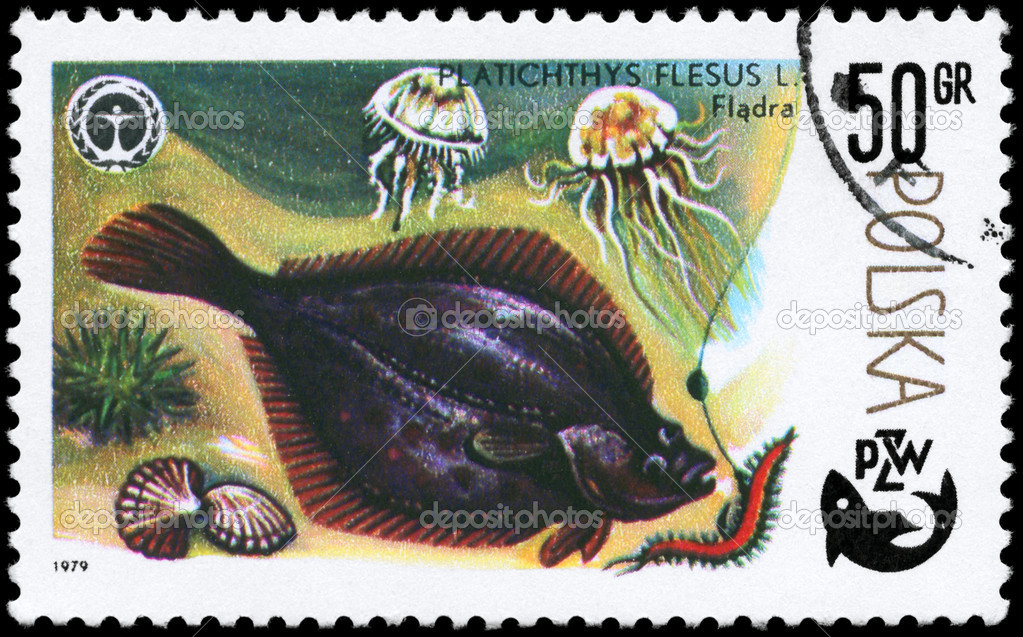 POLAND - CIRCA 1979: A Stamp printed in POLAND shows image of a Flounder with the description Platichthys flesus from the series Fish and Environmental Prote — Stock Photo #6263963