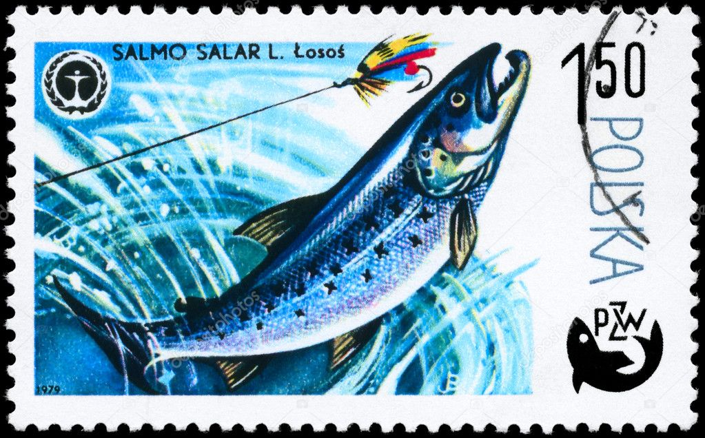 POLAND - CIRCA 1979: A Stamp printed in POLAND shows image of a Atlantic Salmon with the description Salmo salar from the series Fish and Environmental Prote — Stock Photo #6263978